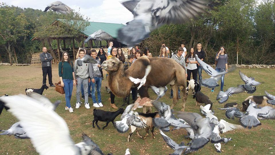 Dan životinja